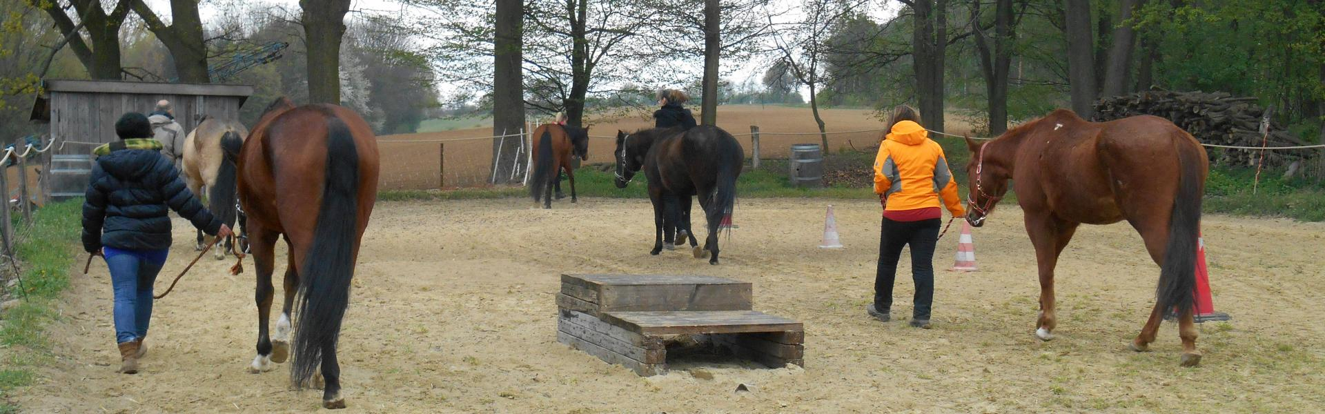 ORV Seminare KG - Sense of Horses cover